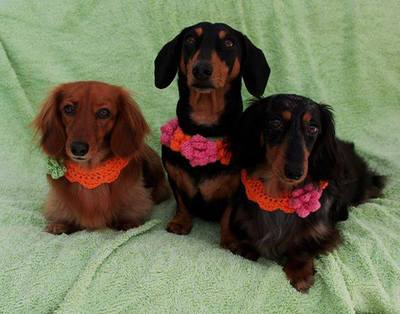 Handmade dog collars, crochet dog collars, buttercup dog collars, Dachshund