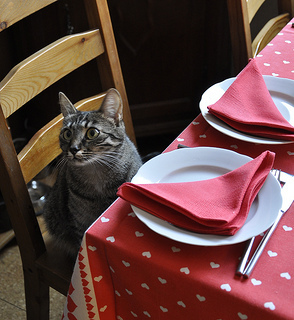 Pet Table Etiquette, Feeding Pets, Table Scraps, Begging for Food