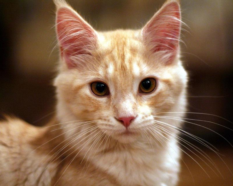 cat, cat names  - What is the best cat name?