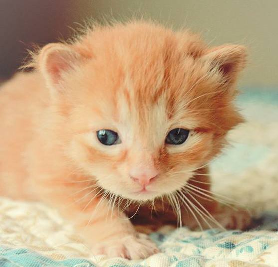 cat, kitten, pet, animal  - Things to Know Before you Bring Home Your First Cat or Kitten