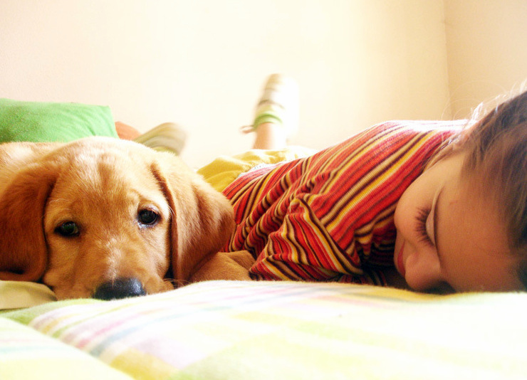 pets, labrador puppy, best pets for kids  - 5 Reasons Why Every Child Needs a Pet