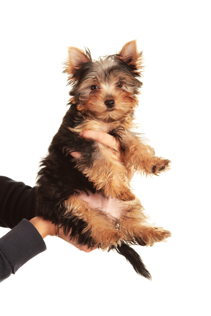 How To Potty Train Your Pooch Ready For Pets